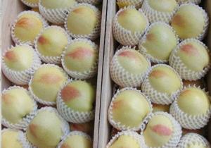 水果网套-本色