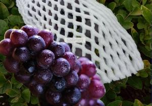 水果网套-本色不含色素
